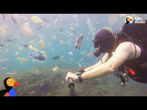Plastic Is Taking Over The Ocean | The Dodo World Ocean Day