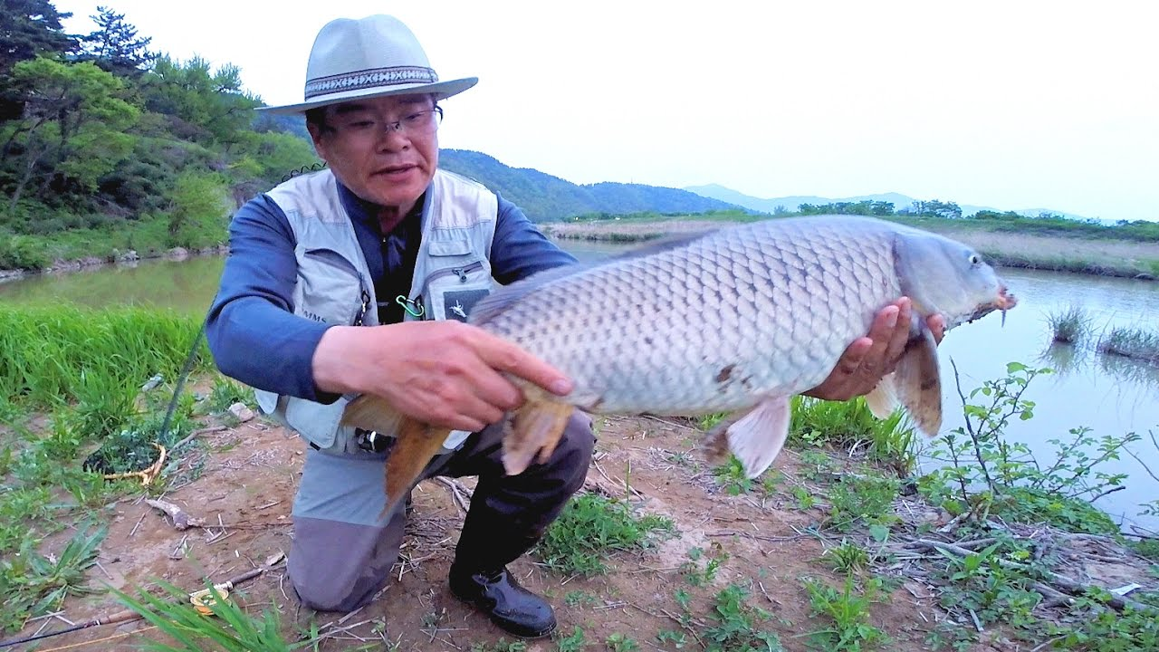 Fly fishing for Carp, - Episode 8 ( 잉어플라이낚시 )