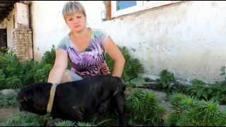 Собаке из приюта требуется помощь