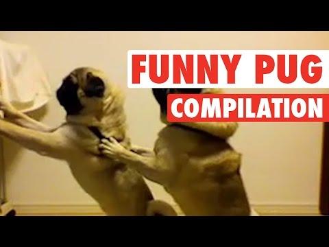 Pug Lyfe || Funny Pug Compilation