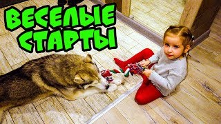 ВЕСЁЛЫЕ СТАРТЫ (Хаски Бублик) Говорящая собака