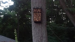 Birdhouse- Bat House- Insect Motel