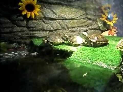 Acquario tartarughe d 39 acqua dolce 150 l in fase di for Acquario per tartarughe con filtro