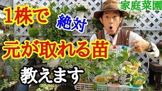 【失敗しない選び方】あなたに合った家庭菜園の野菜苗教えます【カーメン君】【園芸】【ガーデニング】【初心者】