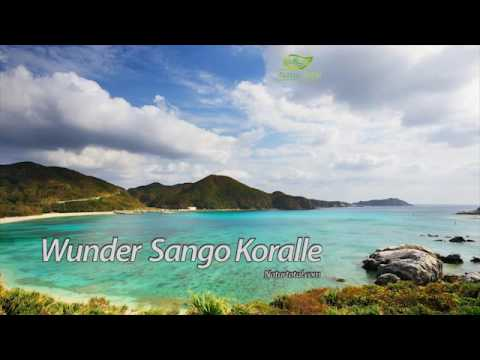 Wunder Sangokoralle