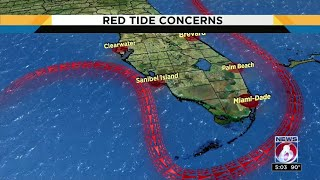 How red tide made its way to Brevard County