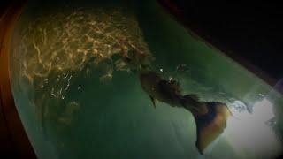 mysterious mermaid swimming at night