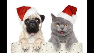 Funny and humorous animals in Christmas | LOL Therapy