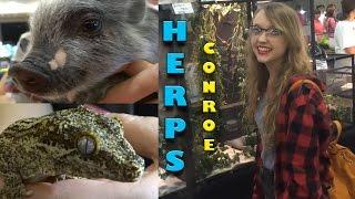herps conroe reptile show