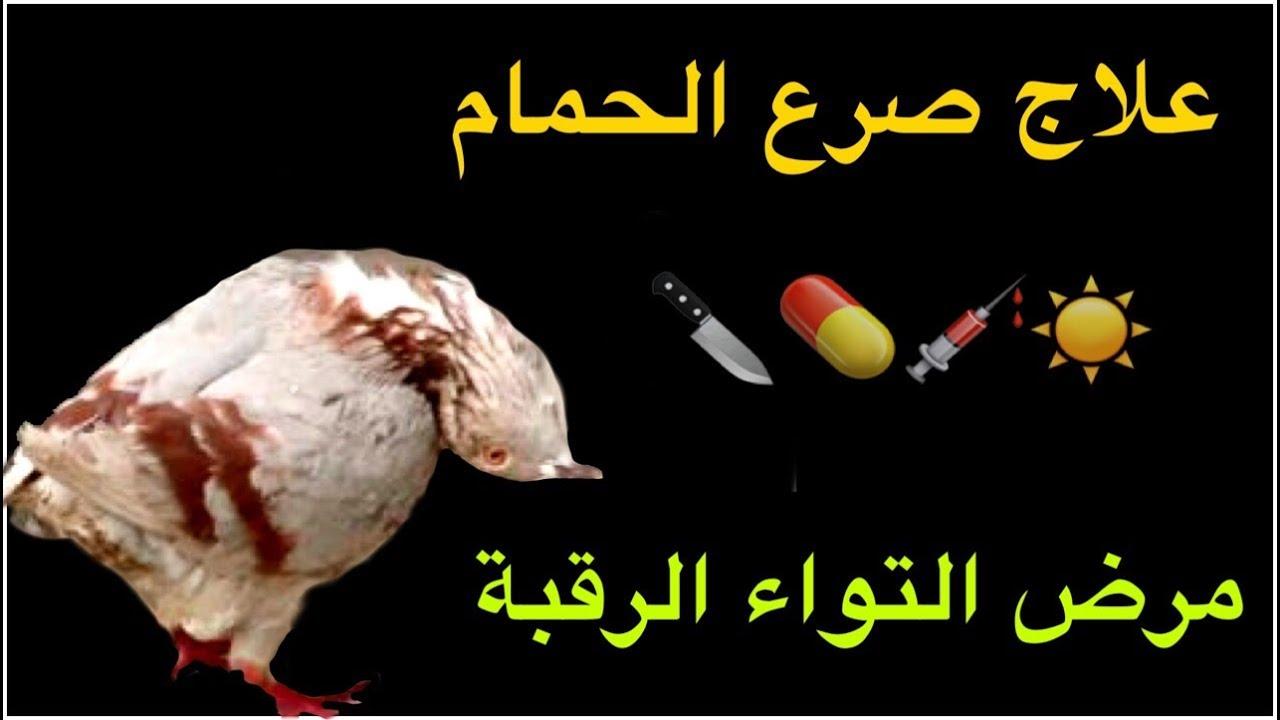 فيديو أفضل طريقة لعلاج مرض التواء الرقبة صرع الحمام صوح الحمام الروشة بورقيبة براميسكو Paramyxo Youtube