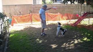 The Canine Stars And Team Pit Bull Show Why To Rescue A Dog!