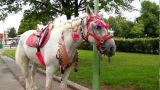 Лошадки в парке
