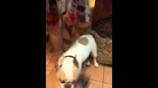 Порево с собакой