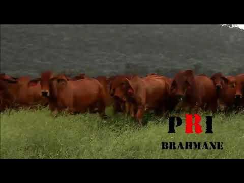 First class Brahmans
