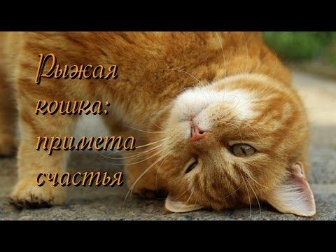 Рыжая кошка примета счастья