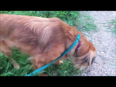 Grass Eating Behaviour In Dogs