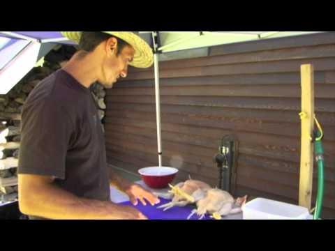 Backyard Poultry Process Station