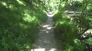 My River Walk @ Cenarth Falls