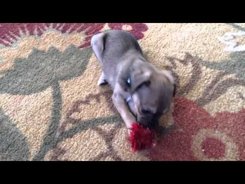 Puppies Are Awesome: Compilation