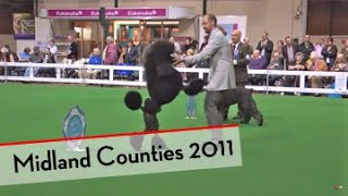 Highlights of Midland Counties Dog Show 2011