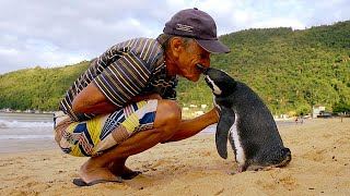 Jinjing The Penguin - Swims 5000 Miles Every Year To Visit The Man Who Saved Him