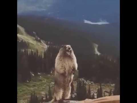 Tourette Bei Tieren Youtube