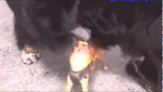 Самое смешное видео про кошек...смотреть всем!!!!
