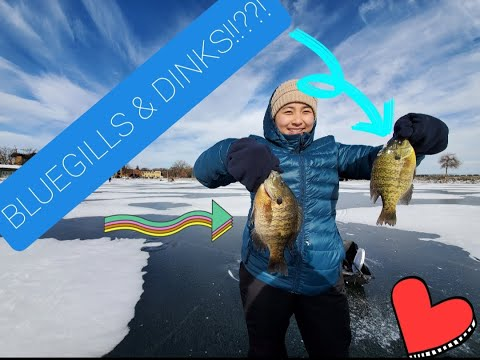 Ice Fishing Monona Bay, Madison WI (Gills & Dinks)