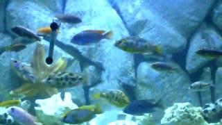 Diy 3d Aquarium Background Homemade