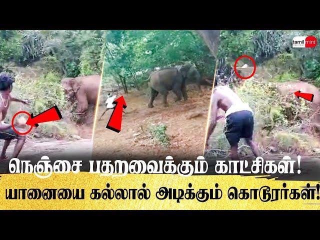 நெஞ்சை பதறவைக்கும் காட்சிகள்! யானைகளை கல்லால் அடிக்கும் கொடூரர்கள்! Elephants | Attacked