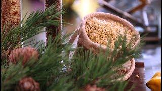 Кедровые орехи: откуда в них ртуть?