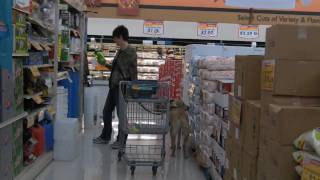 Born To Lead--a Guide Dog Documentary