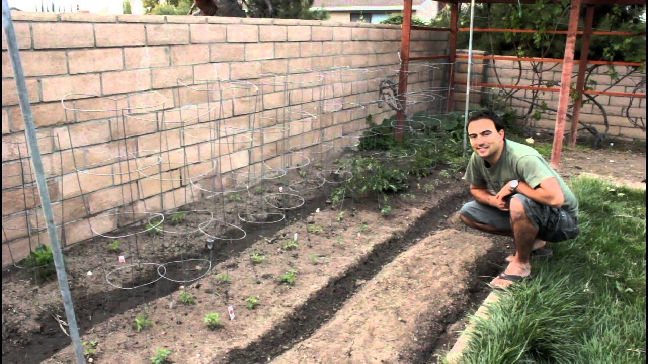 Easy Garden Tips And Ideas For Growing Tomatoes From The
