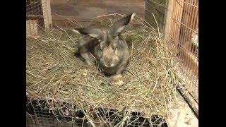 Разведение кроликов. Урожайные грядки.(Кролиководством занимаюсь с детства. 4 года занимаюсь на новом уровне. Приобрел технологию Миакро у Михайло..., 2016-03-16T08:26:33.000Z)