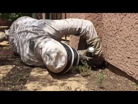 4 Killer Bee Hives Attack, Trap Family in House