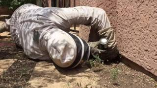 4 killer bee hives attack trap family in house