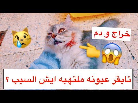 / Mohamed Vlog