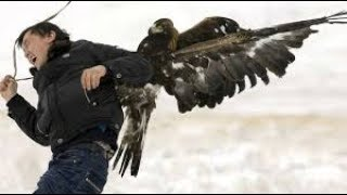 Top 10 Eagle Attacks on Animals and Humans- Must Watch