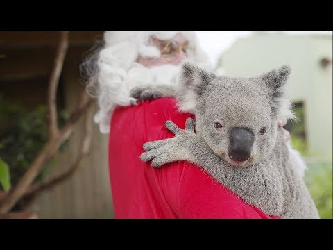Zoo Animals celebrate Christmas in Sydney