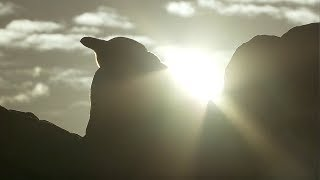 Penguin Protects Egg From African Sun | Africa | BBC Earth