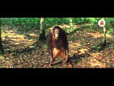 Sahasa Baludu Vichitra Kothi Movie - Vijaya Shanthi, Master Anvesh, Brahmanandam Nice Scene