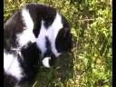 Kitty  PUSA