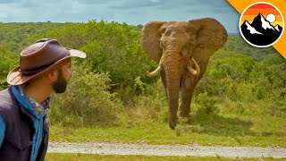 DANGEROUS ELEPHANT ENCOUNTER!