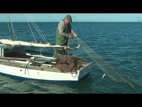 Italian Net Fishing