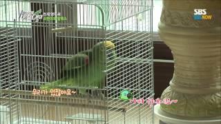 SBS [세상에이런일이] - 천재 앵무새