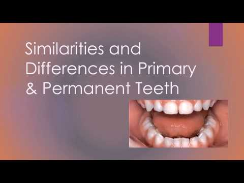 Group 6 Permanent and primary teeth comparison