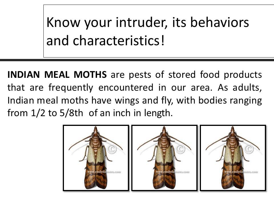 Pest Control Invasion Of The Clothes Eaters Moths Youtube