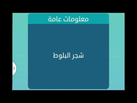 شجر البلوط   من 6 حروف   لعبة كلمات متقاطعة