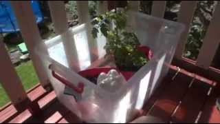 How to Make an Automatic Watering System for Seedlings or Pot Plants - DIY Gardening Tips