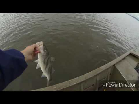 Fishing The Upper Chesapeake Bay For Striped Bass (rockfish) - Lower Susquehanna River